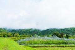 культивирование риса с сеткой для того чтобы защитить животных Стоковое Изображение