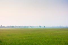 Культивирование риса Стоковая Фотография RF