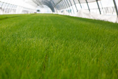 Культивирование саженца CSR дня мировой окружающей среды экологичности саженцев идет зеленый сад еды здравоохранения земли Eco др Стоковое фото RF