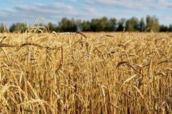 Культивирование урожаев в полях Стоковые Фотографии RF