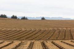 Культивируемое сельскохозяйственное угодье Стоковые Фотографии RF