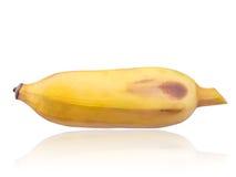 Культивируемый банан, банан изолированный на белой предпосылке Стоковые Изображения RF