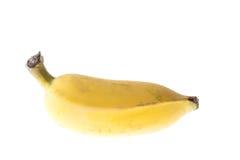 Культивируемый банан, тайский банан изолированный на белизне Стоковое Фото