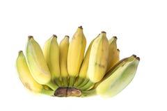 Культивируемый банан, тайский банан изолированный на белизне Стоковое фото RF