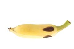 Культивируемый банан, тайский банан изолированный на белизне Стоковые Фотографии RF