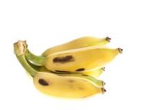 Культивируемый банан, тайский банан изолированный на белизне Стоковое Изображение