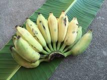 Культивируемый банан, тайский банан и зеленый банан листают Стоковая Фотография RF