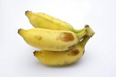 культивируемый банан Стоковая Фотография