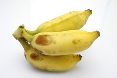 культивируемый банан Стоковое Изображение RF