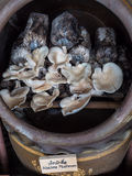 Культивируйте грибы Стоковое Изображение RF