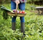 Культивируйте концепцию роста природы сада сезонную Стоковые Изображения RF