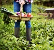 Культивируйте концепцию роста природы сада сезонную Стоковое фото RF