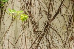 Классическая ретро стена Стоковая Фотография