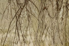 Классическая ретро стена Стоковые Фото
