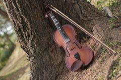 Классическая скрипка под деревом Стоковые Изображения
