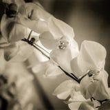 Классические орхидеи Стоковые Фото