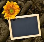 Классн классный и желтый солнцецвет Стоковая Фотография