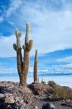01 06 2000 класть слоя озера Боливии de расстояния женских уединённых над водой uyuni путника соли salar тонко гуляя Стоковые Изображения
