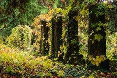 Кладбище в осени Стоковые Фото