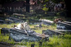 Кладбище в Сурабая Стоковое Изображение RF