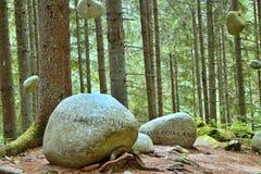 Кладбище леса в Vydrovo, Словакии Стоковые Изображения