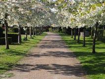 Кладбище Копенгаген Дания Bispebjerg Стоковые Фотографии RF