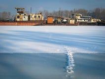 Кладбище корабля зимы: Найдите Fox стоковые фотографии rf