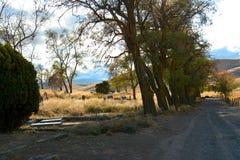 Кладбище малой страны устроенное удобно среди деревьев Стоковое Изображение