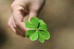 Клевер 4 лист в руке Стоковые Изображения