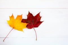 2 кленового листа на белой деревянной предпосылке Стоковые Фото