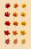 Кленовые листы красного цвета осени Стоковое Фото