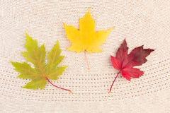 Кленовые листы на шерстях Стоковые Фото