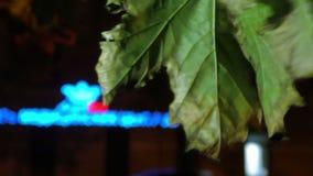 Кленовые листы ночи в ветре сток-видео