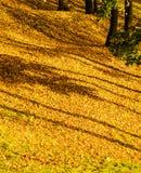 Кленовые листы осени стоковые изображения