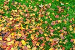 Кленовые листы падения Стоковое фото RF