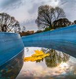 Кленовый лист в канале осенью Стоковые Изображения RF