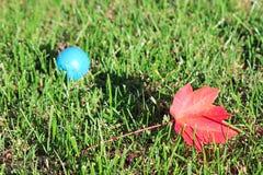 Кленовый лист в траве Стоковые Изображения