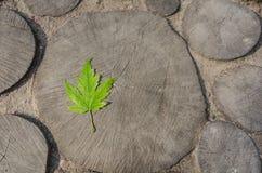 Кленовый лист на деревянной предпосылке Стоковая Фотография