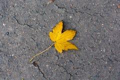 Кленовый лист на дороге Стоковое Фото