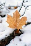 Кленовый лист на снеге покрыл землю Стоковое Изображение
