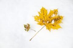 Кленовый лист на снеге Стоковое фото RF