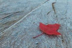 Кленовый лист на таблице Стоковые Фото