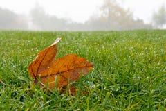 Кленовый лист на траве Стоковое Изображение RF