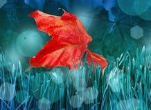Кленовый лист осени красивого крупного плана красный на траве с славным запачканным bokeh и мягкой голубой предпосылкой Стоковое Изображение RF