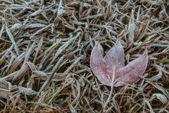 Кленовый лист покрытый с ледяным кристаллом Стоковая Фотография RF