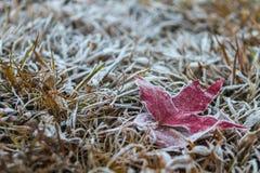 Кленовый лист покрытый с ледяным кристаллом Стоковые Изображения RF