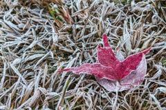 Кленовый лист покрытый с ледяным кристаллом Стоковое фото RF