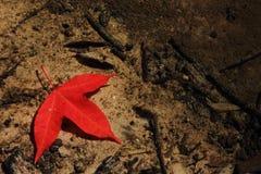 Кленовый лист подводный Стоковые Фото