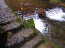 Кленовый лист реки Стоковое Изображение
