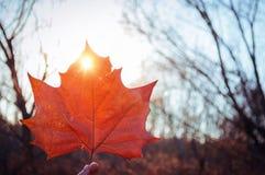 Кленовый лист цвета падения Стоковое фото RF